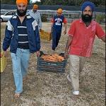 Così vengono sfruttati i Sikh nelle campagne laziali