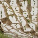 Nutrizione e ambiente in Sri Lanka: il 1° luglio appuntamento in Expo