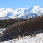 Meraviglie naturali dell'Hokkaido, il Giappone che non ti aspetti