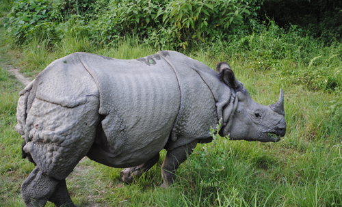 One_horned_Rhino