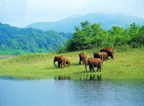 Elefanti nel parco di Periyar. Kerala, India del sud