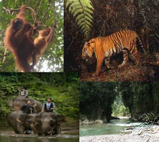 taman-nasional-gunung-leuser-aceh